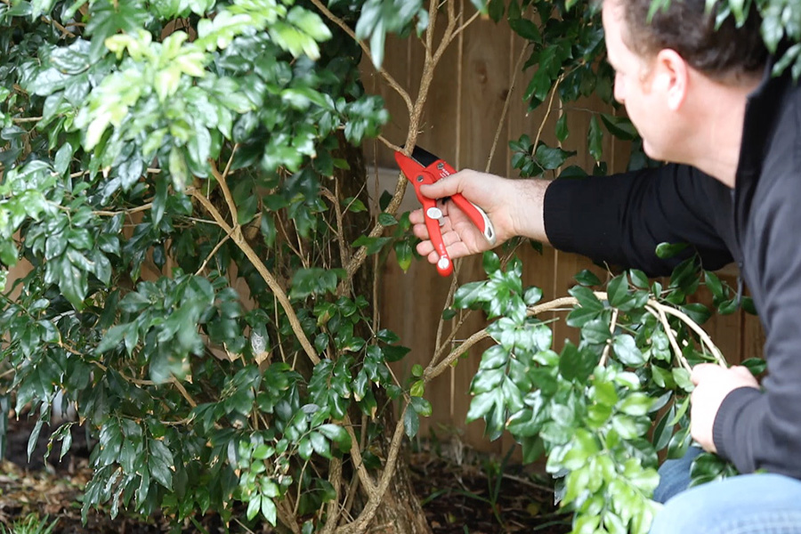 Trim and cut branches fast and easy with the strong ratchet design, the Kleva shears are perfect for bushes and trees