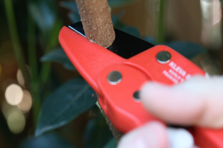 the garden clippers are the best as seen on tv shears, available in red in a great value for money 4 pack deal