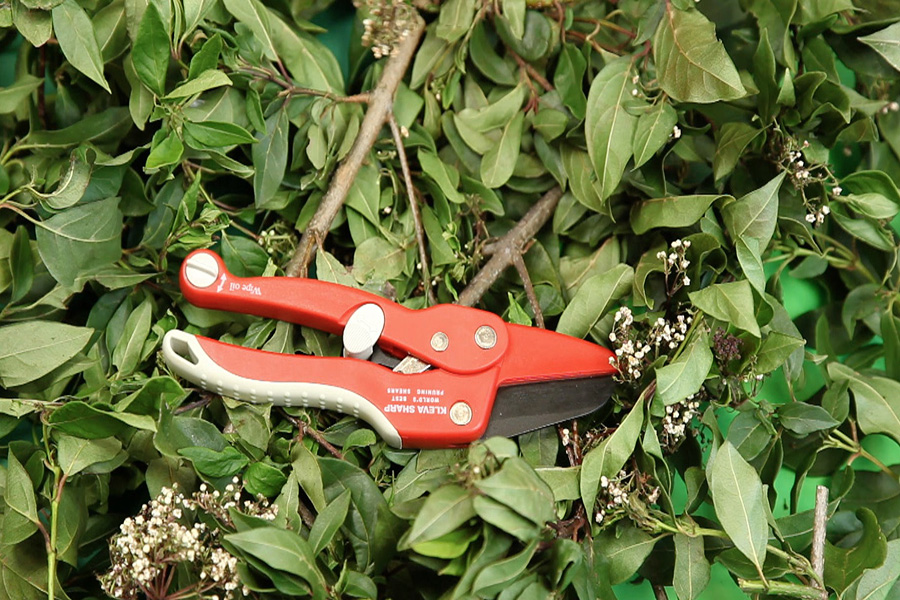 The red famous Kleva Shears, presented by James Cheney are the as seen on TV quick and easy and clever garden tool
