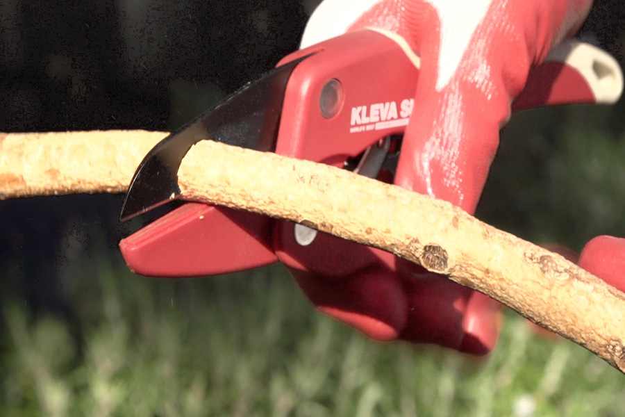 the Kleva shears are so sharp they easily cut thick branches. The best selling as seen on TV secateurs from the commercial