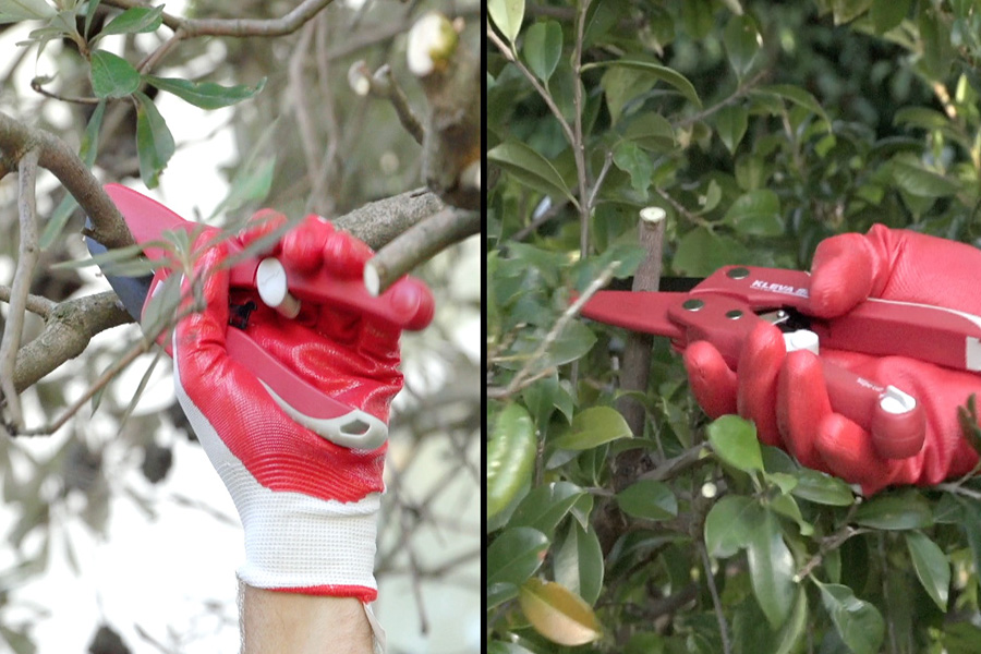 Thick branches are no problem with the as seen on tv sharp, safe and easy red kleva shears. Keep your garden clean, tidy and trim.